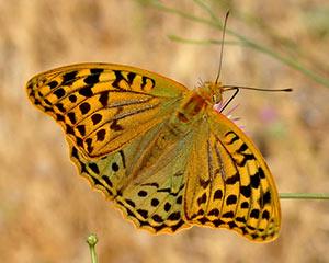 Resultado de imagen de postales de mariposas heladas