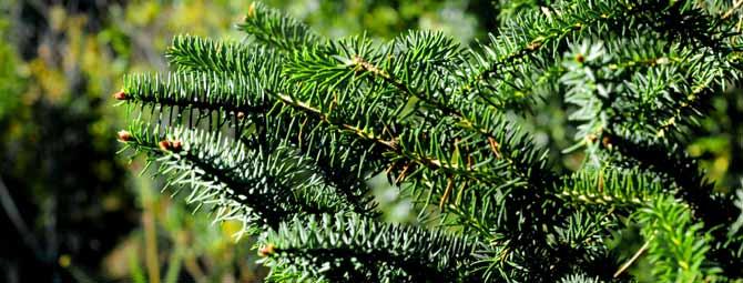 Enlaces de inter s tempul for Asociacion pinar jardin