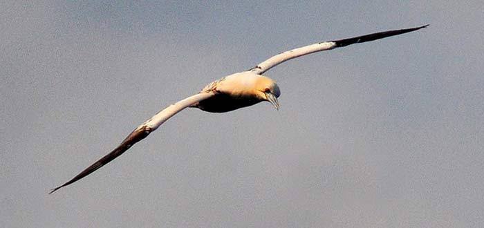 Las aves del Mar de Alborán, a estudio en un curso de UNED Málaga