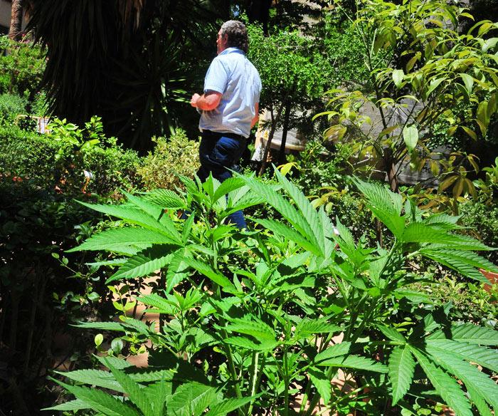 Plantas Venenosas En Waste Magazine